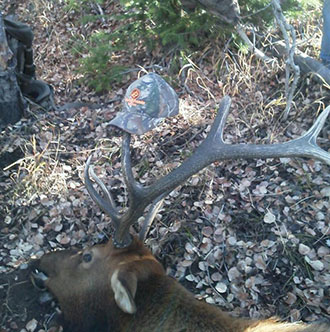 Drop Camps in Steamboat Springs, CO enjoy a hunt you can hang your hat on!